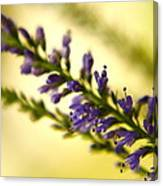 Purple Spear Canvas Print