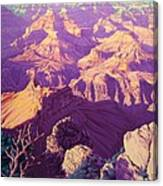 Purple Splendor Canvas Print