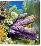 Purple Sponge Canvas Print
