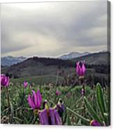 Purple Spring In The Big Horns Canvas Print