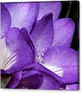 Purple Springtime Canvas Print