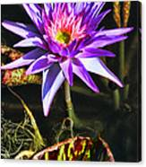 Purple Star Water Lily  By Diana Sainz Canvas Print