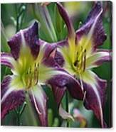 Purple Stargazers Canvas Print