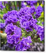 Purple Statice Flower Arrangement Canvas Print