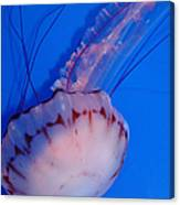 Purple Striped Jelly Fish 5d24930 Canvas Print