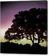 Purple Sunset Green Flash And Oak Tree Silhouette Canvas Print