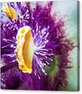 Purple Surprise Canvas Print