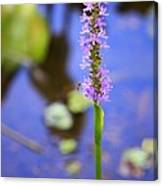 Purple Swamp Flower Canvas Print