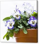 Purple Swirl Violas Canvas Print