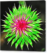 Purple Thistle Flower Canvas Print