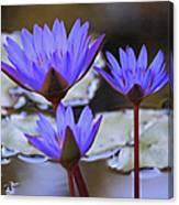 Purple Times Three Canvas Print