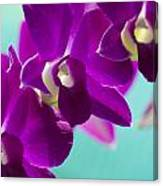 Purple Trio - Orchids Canvas Print