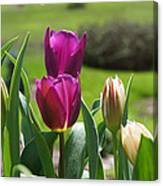 Purple Tulips Garden Art Print Tulip Flowers Canvas Print