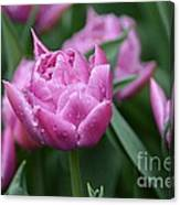 Purple Tulips In The Rain Canvas Print