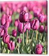 Purple Tulip Standouts Canvas Print