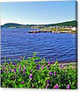Purple Vetch Overlooking Rocky Harbour-nl Canvas Print