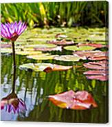 Purple Water Lily Flower In Lily Pond Canvas Print