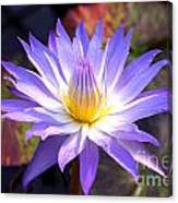 Purple Waterlily With Fall Lilypads Canvas Print