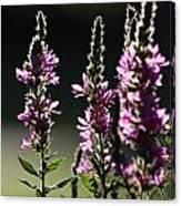 Purple Wild Flowers - 1 Canvas Print