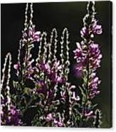 Purple Wild Flowers - 2 Canvas Print