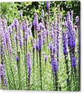 Purple Wild Flowers 2 Canvas Print