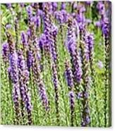 Purple Wild Flowers3 Canvas Print