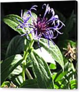 Purple Wildflower Canvas Print
