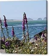 Purple Wildflowers At Netarts Bay Canvas Print