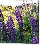Purple Wildlfowers Canvas Print