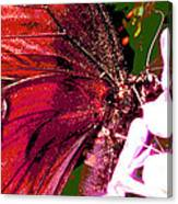 Purple Wings Two Canvas Print