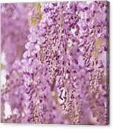 Purple Wisteria Canvas Print