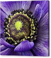 Purplelove Canvas Print