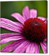 Purples And Reds Canvas Print