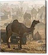 Pushkar Camel Fair - India Canvas Print