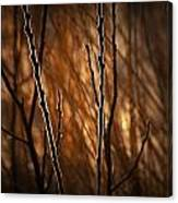 Pussy Willows In The Warm Sunlight Canvas Print