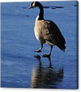 Put Your Best Foot Forward Canvas Print