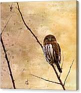 Pygmy Owl - The Watcher Canvas Print