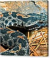 Pygmy Rattlesnake Canvas Print