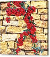 Pyracantha Berries On Stone Wall Canvas Print