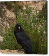 Qouth The Raven Nevermore Canvas Print