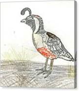 Quail Bird Canvas Print