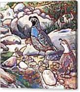 Quail Family Canvas Print