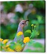 Quail In A Garden Canvas Print