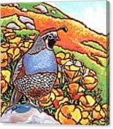 Quail Poppies Canvas Print