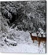 Quartet In The Snow Canvas Print
