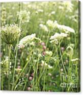 Queen And Clover Canvas Print