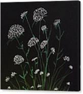 Queen Anns Lace Canvas Print