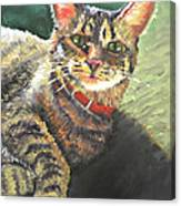 Queen Of The House Canvas Print