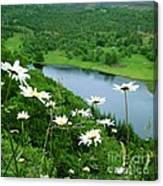 White Daisies At Queen's View 2 Canvas Print
