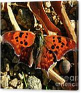 Question Mark Butterfly Canvas Print